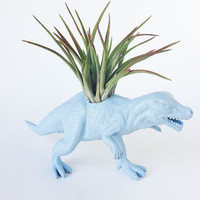 Dinosaur Planter with Air Plant Room Decor, College Dorm Ornament, Blue Office Accessory