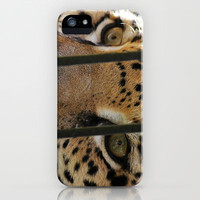 Hungry Eyes iPhone Case by Beth - Paper Angels Photography