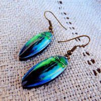 Green Beetle Wing Earrings, Beetle jewelry, Insect, Bug, Bug jewelry, Insect jewelry, Green earrings, Wing earrings, Beetle wing, Gift her
