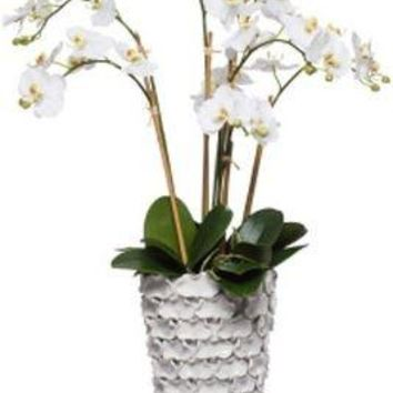 White Phal In Tall White Vase
