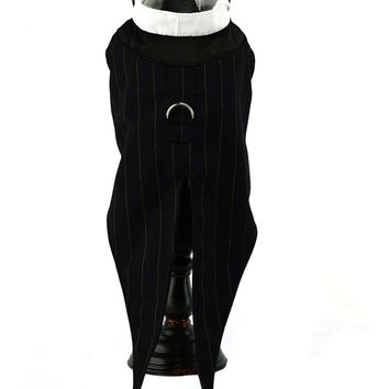 Black Dog Tuxedo with Tails
