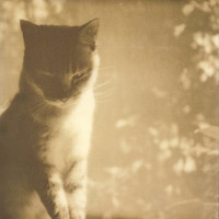 Portrait of a Feline No. 2 - Polaroid Photography Art Print by Briana Morrison