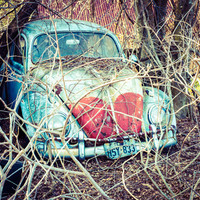 Love Bug in the Veins Art Print by Squint Photography | Society6