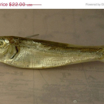 1981 Ken Loeber Real Fish Lucite Brooch Pin