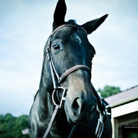 Horse Photograph, Western Farm Pony Photo, Equestrian Photo, Animal Photography, Rustic, Rural, Country, Farms, Horses Home Decor, Wall Art
