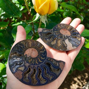 Ammonite Pair from Madagascar | Prosperity | Fossil | Empowerment