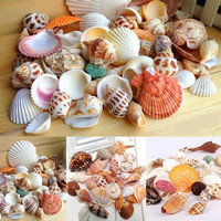 Sea Decor Home Approx 100g Shells Mixed Shell Table Bulk Ornamental Beach Aquarium Colorful