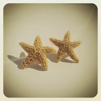 Real Starfish Earrings by AmerikanMermade on Etsy