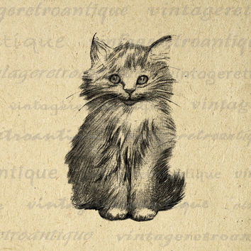 Printable Digital Cute Kitten Graphic Cat Image Illustration Download Antique Clip Art for Transfers etc HQ 300dpi No.1859
