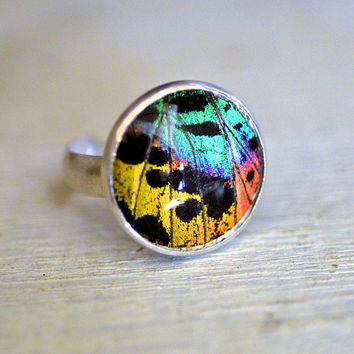 Waterproof Real Sunset  Moth Wing Ring Sterling Silver Custom Size
