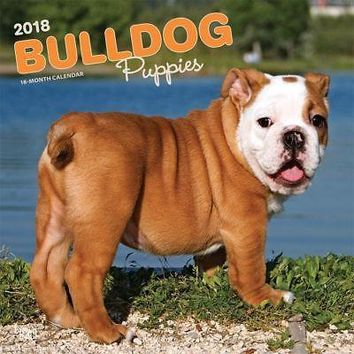 Bulldog Puppies Wall Calendar, Bulldog by BrownTrout