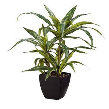 "Fake Plants Tropical Dracaena in Pot - 24"" Tall"
