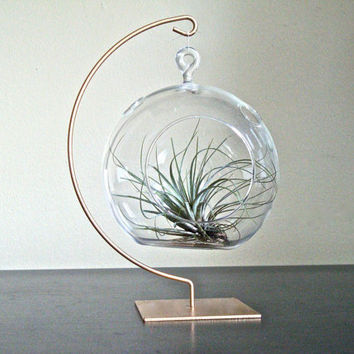 DIY Terrarium or Table Decoration Hanging Glass by eGardenStudio