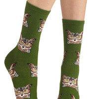 ModCloth Owls, Scholastic Look Hoots Here Socks