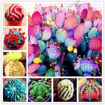 210pcs/bag Mixed Cactus Seeds multiple beautiful  Ornamental Plants,for home and garden