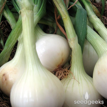 Walla Walla Onion Heirloom Seeds - Non-GMO, Open Pollinated, Untreated