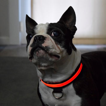 Night Safety Glow In Dark Nylon LED Dog Collar
