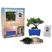 Bonsai Tree Gift Kit plus Live Japanese Juniper Tree