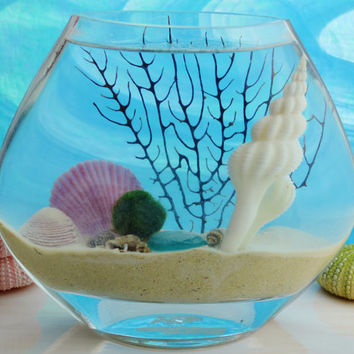 Under the Sea ~ Japanese Marimo Moss Ball Aquatic Terrarium ~ 100% Real Sand ~ Sea Shells/Sea Fan ~ Moon Vase ~ Home/Office Decor ~ Gift