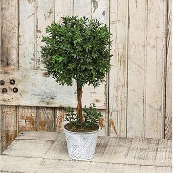 "New England Boxwood 14.75"" H Topiary"