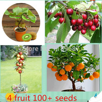 4 kind fruit  ,bonsai fruit  tree seeds ,vegetable and fruit seeds  total 100+ seeds