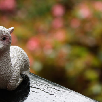 Cute Cushed Clay Cria Alpaca Figurine