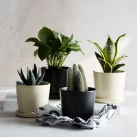 The Sill Planter + Plant - The August