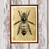Cabin decor Bee poster Insect print Antique art AK225