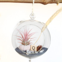 "Terrarium Glass- 6.5"" hanging globe"