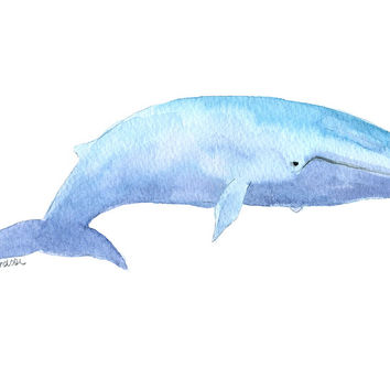 Blue Whale Watercolor