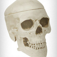 White Human Skull Shaped Box