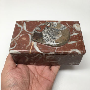 "666g, 5""x3""x2"" Rectangular Fossils Ammonite Red Jewelry Box @Morocco, MF654"