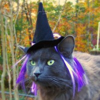 Witch Cat Dog Hat with Wiglet The Purple by ToScarboroughFair