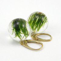 Gold Moss Round Earrings, Forest Jewelry with Natural Moss Embedded in Clear Resin with Gold Earrings