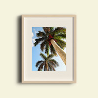 Palm Tree Photography - FREE SHIPPING to USA summer fun pictures florida palm trees bright sunshine state 5x7 8x10 11x14 prints look up