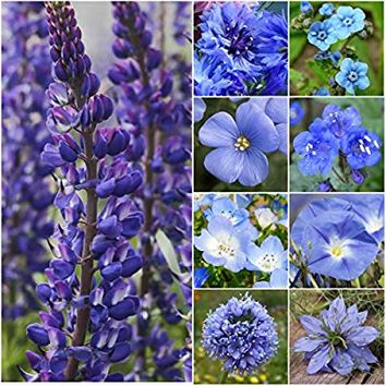 "Bulk Package of 30,000 Seeds, Wildflower Mixture""Dazzling Blue"" (99% Pure Seed - 9 Species) Seeds by Seed Needs"