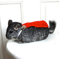 Avengers Thor costume guinea pig / chinchilla (with hammer!). Pet Halloween costumes by Marmota Café.