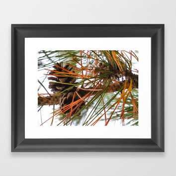 Pine Cone in Pine Tree Framed Art Print by lanjee