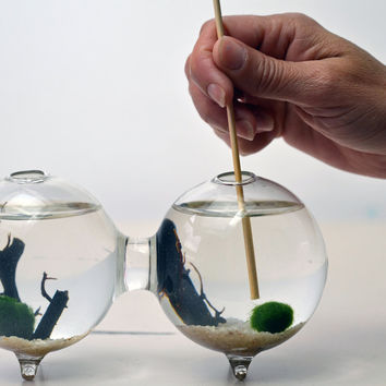 Marimo Terrarium - Japanese Moss Ball - Double Aquarium - sea fan - sand