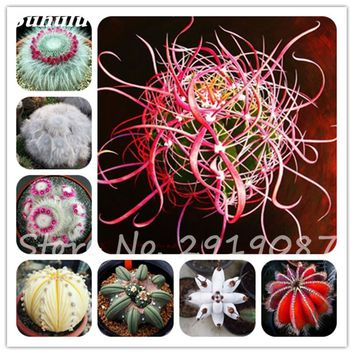 Real Mini Cactus Seeds 100 Pcs Mixed Rare Succulent Bonsai Flowers Perennial Herb Plants For Indoor Plant Easy Grow In Pots