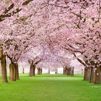 Trees Pink Open Photography Backdrop / 2062
