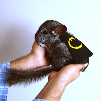 Chinchilla costume cape Batman