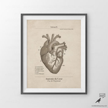 Anatomical Human Heart Illustration, Human Anatomy Series, Vintage Medical Illustration, Vintage Inspired Medical Art