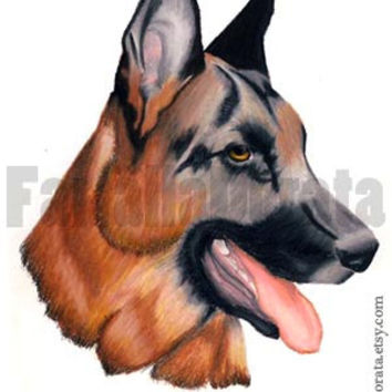 Dog custom portrait hand drawn in colored pencils, portrait of your dog or just for dog lovers, commissioned, personalized portrait
