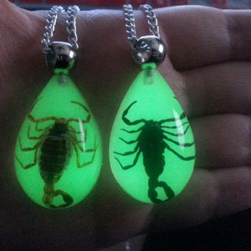 YELLOW Scorpion - Taxidermy - Glow in the Dark - Pendant / Necklace