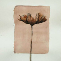 FLOWERS - Lovely tulip - Drawings with Ink, pencil and acrylic on acid free paper by Cristina Ripper