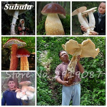 Super Big Mushroom Seeds 40 Pcs Organic Delicious Funny Fungus Succulent Plant, Edible Health Seeds Easy To Grow For Garden