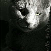 Feline Cat Photography gray,black and white,Gifts under 25, smile,furry,pet lovers,FREE SHIPPING
