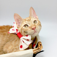 Red polka dot bow tie cat accessory, cat fashion, pet bow tie collar, handmade in cotton woven, red dot print, photo prop for pets sassy bow