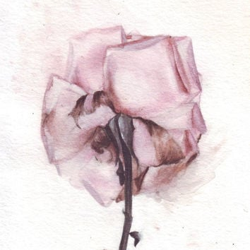 HM081 Original art watercolor painting Rose by Helga McLeod